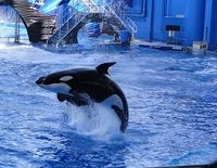 Turismo: Orlando - Sea World