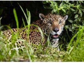 Iguatemi Campinas recebe exposição de fotos sobre o Pantanal
