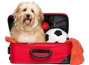 Vai viajar com seu cão? Veja as dicas para uma viagem tranquila